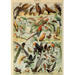 Puzzle  Grafika-00596 Illustration du Larousse pour Tous: Oiseaux, XIXè Siècle