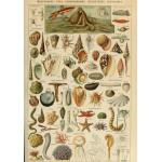 Puzzle  Grafika-00602 Illustration du Larousse pour Tous: Mollusques, XIXè Siècle