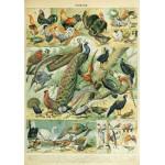 Puzzle  Grafika-00603 Illustration du Nouveau Larousse Illustré: Oiseaux, XIXè Siècle