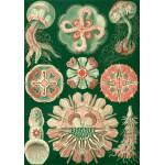 Puzzle  Grafika-00616 Ernst Haeckel: Les Trachyméduses, 1904