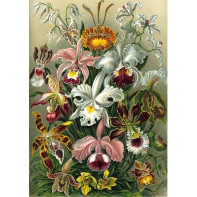 Puzzle Grafika-00617 Ernst Haeckel: Kunstformen der Natur - Orchidae (1904)