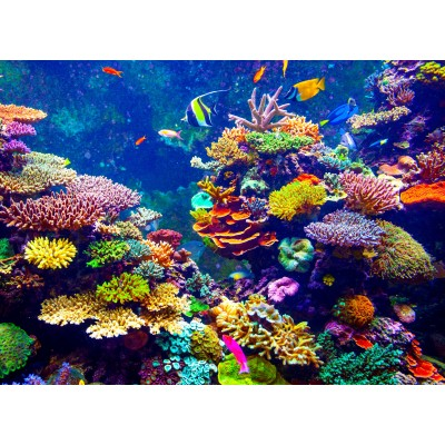 Puzzle Grafika-00976 Unterwasser