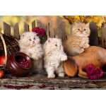 Puzzle  Grafika-01143 Persian kittens