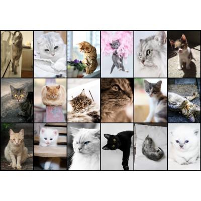 Puzzle Grafika-01212 Collage - Kätzchen