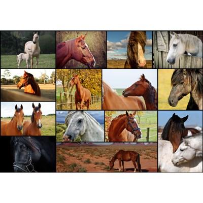 Puzzle Grafika-01213 Collage - Pferde