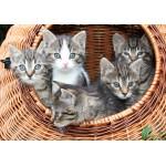 Puzzle  Grafika-01237 Kätzchen im Körbchen