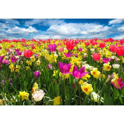 Puzzle Grafika-01279 Tulpen