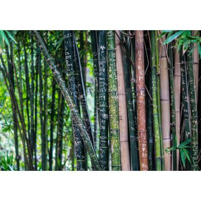 Puzzle Grafika-01370 Bamboo