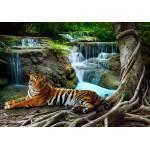 Puzzle  Grafika-01561 Tiger