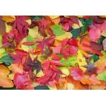 Puzzle  Grafika-01633 Herbst-Impressionen
