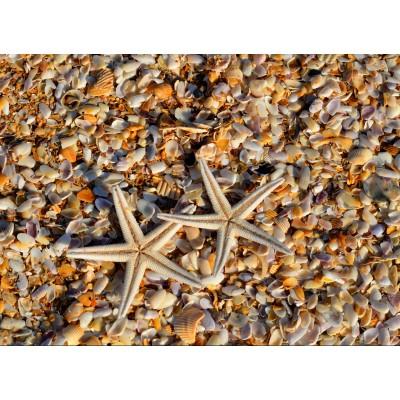 Puzzle Grafika-01687 Muscheln und Seestern