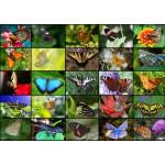 Puzzle  Grafika-T-00046 Collage - Schmetterlinge