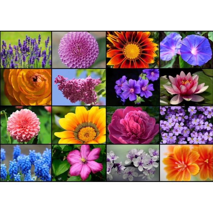 Collage - Frühlingsblumen