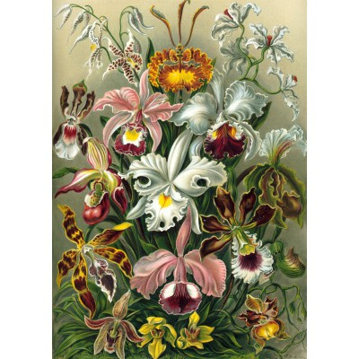 Puzzle Grafika-T-00058 Ernst Haeckel: Kunstformen der Natur - Orchidae (1904)