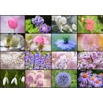 Puzzle  Grafika-T-00085 Collage - Frühlingsblumen