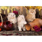 Puzzle  Grafika-T-00088 Persian kittens