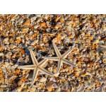 Puzzle   Muscheln und Seestern