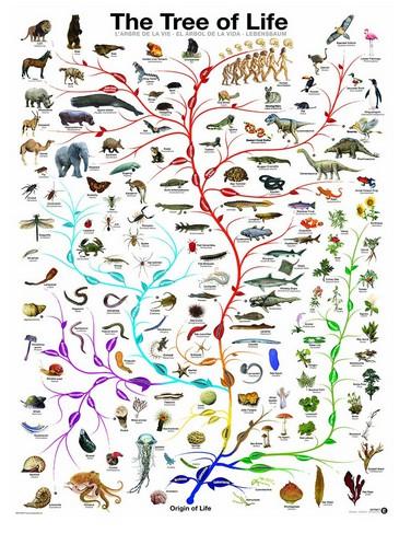 Geschichte Baum Des Lebens