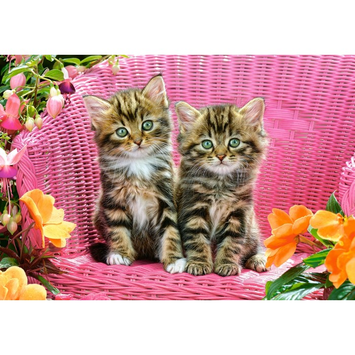 Kittens on Garden Chair