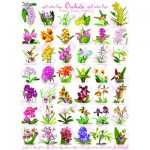Puzzle  Eurographics-6000-0655 Orchideen