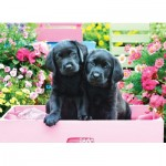 Puzzle  Eurographics-8500-5462 XXL Teile - Black Labs in Pink Box