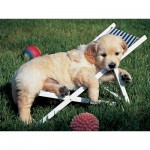 Puzzle  Ravensburger-14179 Golden Retriever