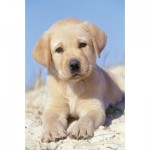 Ravensburger-94874-09430-08 Minipuzzle - Golden Retriever