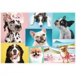 Puzzle   Cute dogs