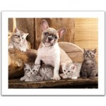 Pintoo-H1567 Puzzle aus Kunststoff - Little Kittens and A Dog