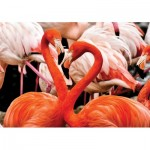 Puzzle   Flamingo Lovers