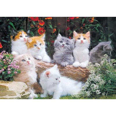 Puzzle KS-Games-11243 Baby Cats