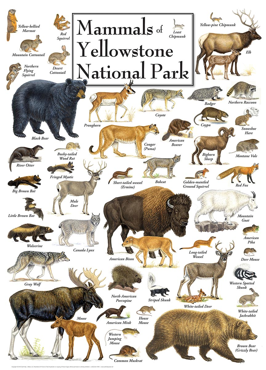 master-pieces-mammals-of-yellowstone-national-park-1000-teile-puzzle-master-pieces-71974