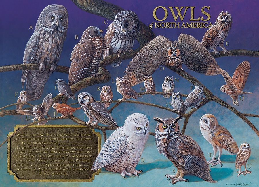 cobble-hill-outset-media-owls-of-north-america-1000-teile-puzzle-cobble-hill-80011
