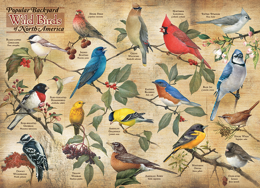 cobble-hill-outset-media-popular-backyard-wild-birds-of-n-a-1000-teile-puzzle-cobble-hill-80024