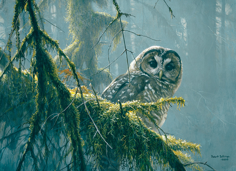XXL Teile - Mossy Branches - Spotted Owl