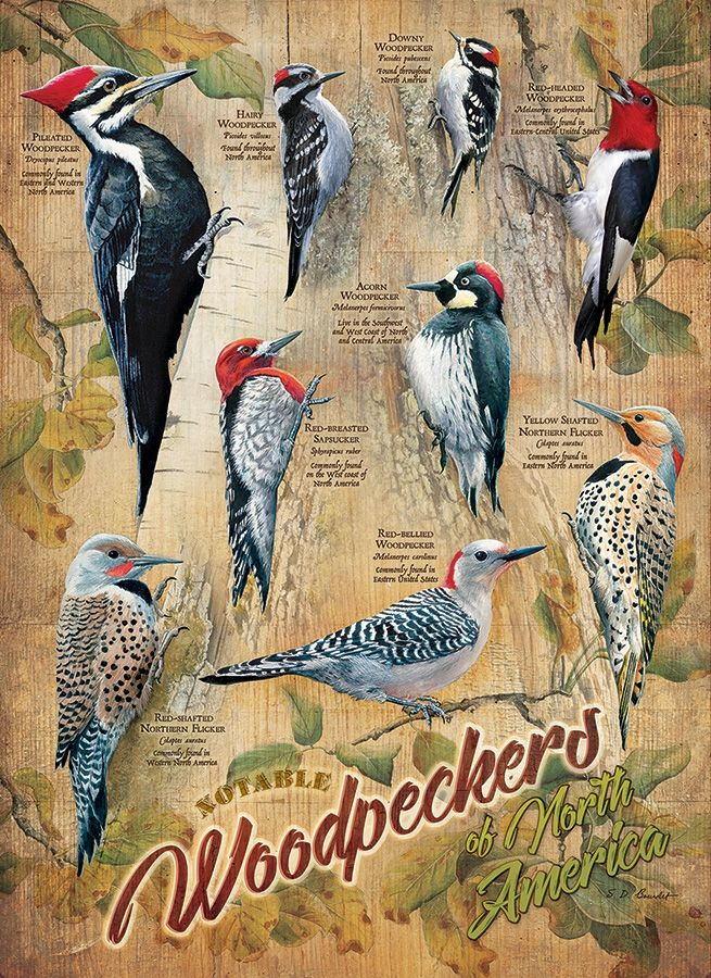 XXL Teile - Notable Woodpeckers