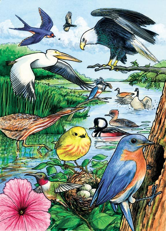 Cobble Hill / Outset Media Rahmenpuzzle - North American Birds 35 Teile Puzzle Cobble-Hill-58809