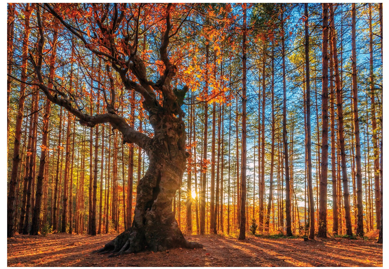 wentworth-holzpuzzle-the-king-of-the-forest-250-teile-puzzle-wentworth-640101