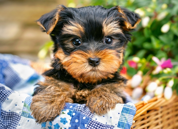 Puppy on a Picnic