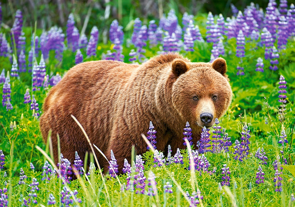 castorland-bear-on-the-meadow-500-teile-puzzle-castorland-52677