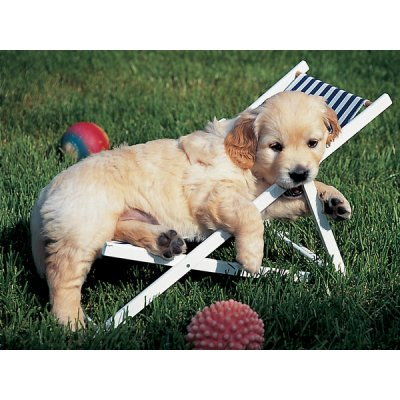 ravensburger-golden-retriever-500-teile-puzzle-ravensburger-14179