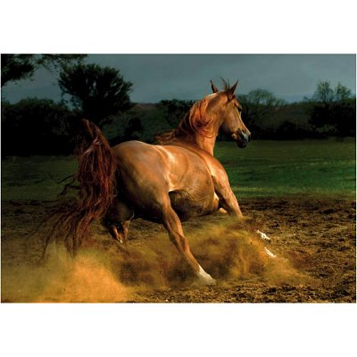 dtoys-galoppierendes-pferd-1000-teile-puzzle-dtoys-70388