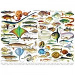 Puzzle  New-York-Puzzle-PD636 Fish - Poissons