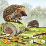 Puzzle  Otter-House-Puzzle-73566 Hedgehog Family