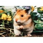 Puzzle   Hamster